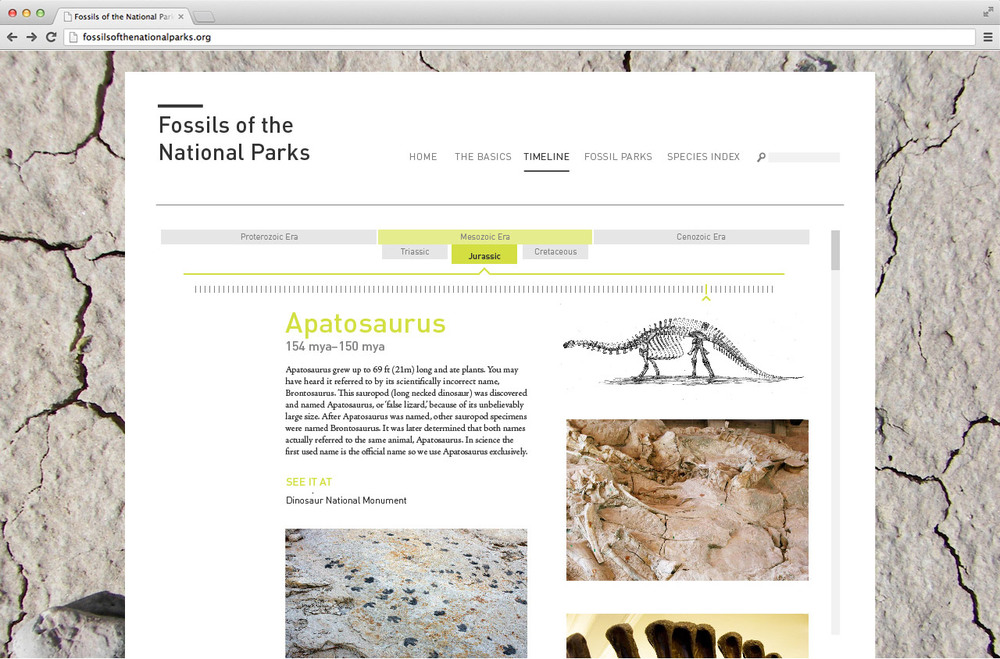 fossils_4.jpg