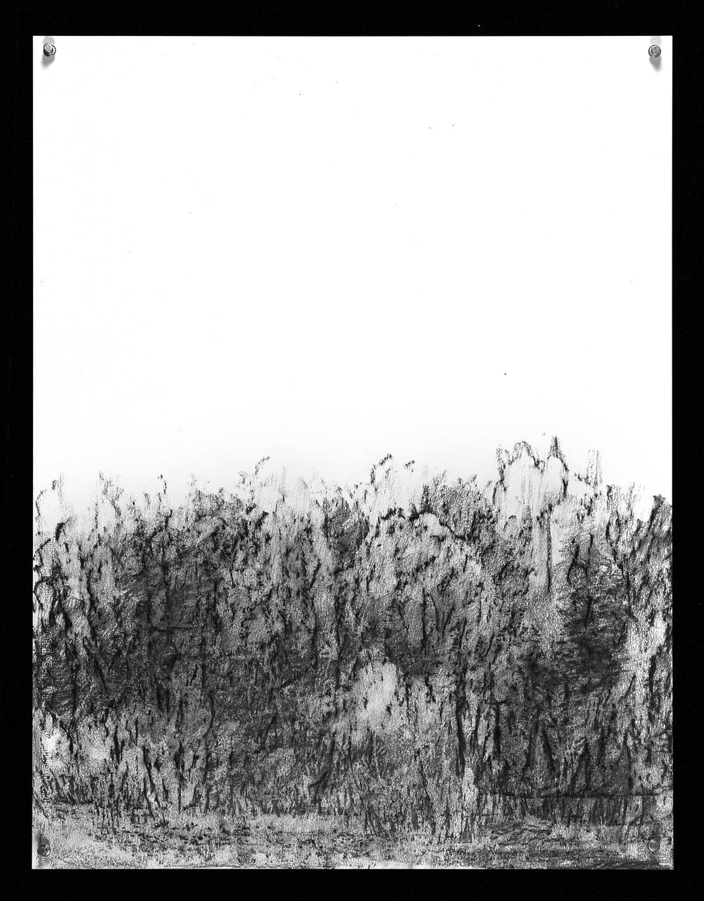 S.D. 77 - 19x25 -(Canson )  2014.jpg