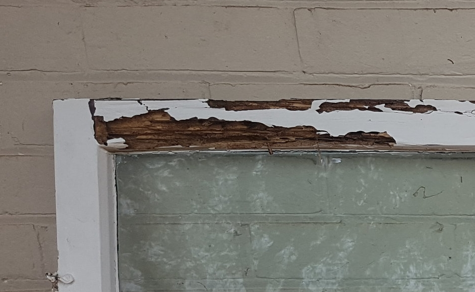 Termite replaced timber