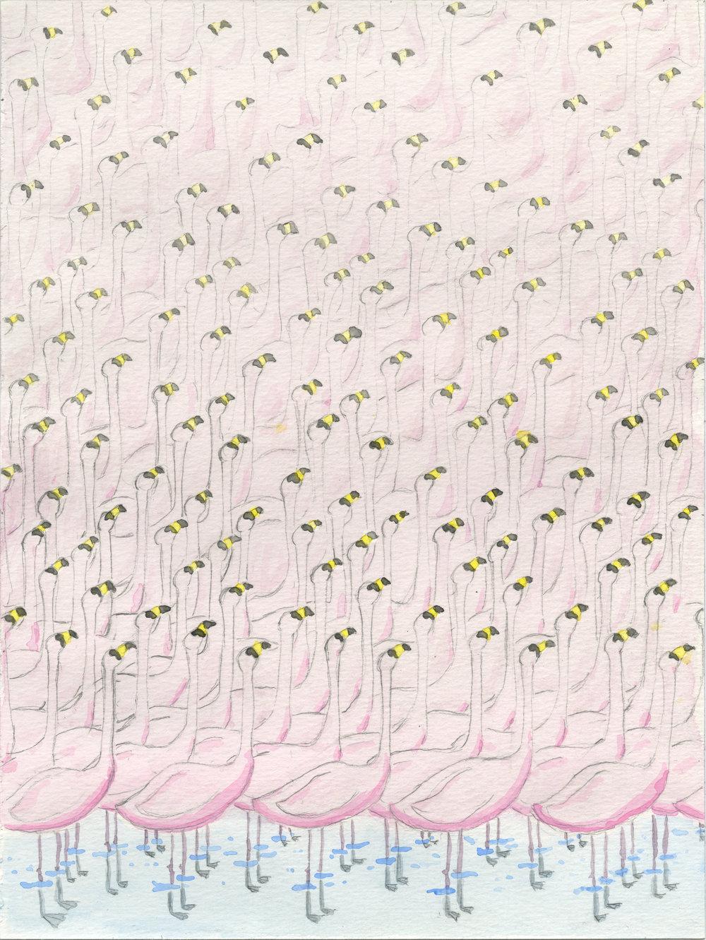 Flamingos, 2014 watercolor on paper