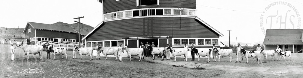 Consolidated Mining & Smelting Co. Ltd. show herd, Warfield BC (Hughes) - 1928