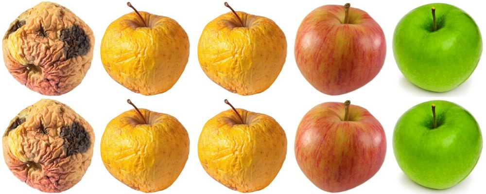 4x2 Apples in row.jpg