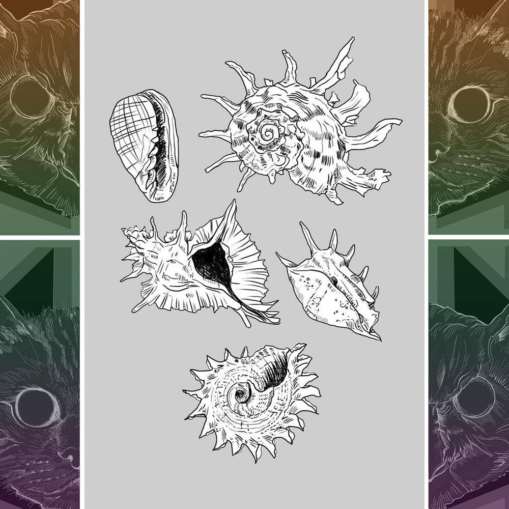 Shells2.jpg