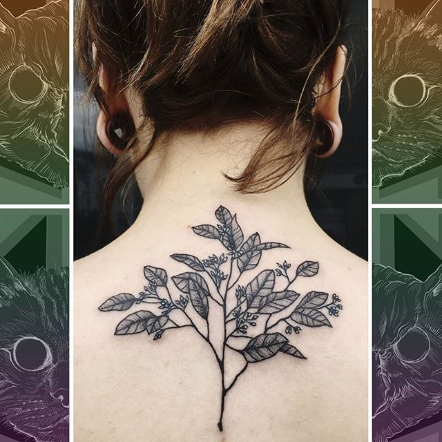 Check out this leafy delight on the top of the back by @sooztattoo  #owlcat #owlcattatto #tattoo #tattoos #tattooworkers #tattooartist #tattoosofinstagram #uktta #aberdeen #aberdeencity #scotland #fun #art #ink #tatmaps #bestofbritishtattoo #sonya7 #seeninthedeen #tattooist #artist #solidink #granitecity #flowertattoo #backtattoo #blackwork