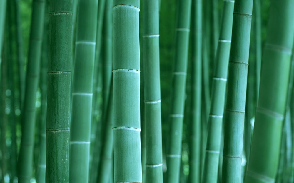 bamboo ii.jpg
