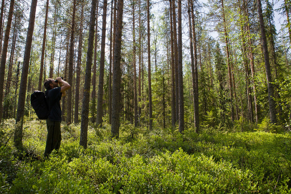Birdwatching in the boreal forest of Käringberget Ecopark.
