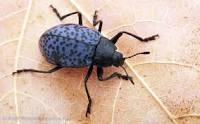 Bug ID