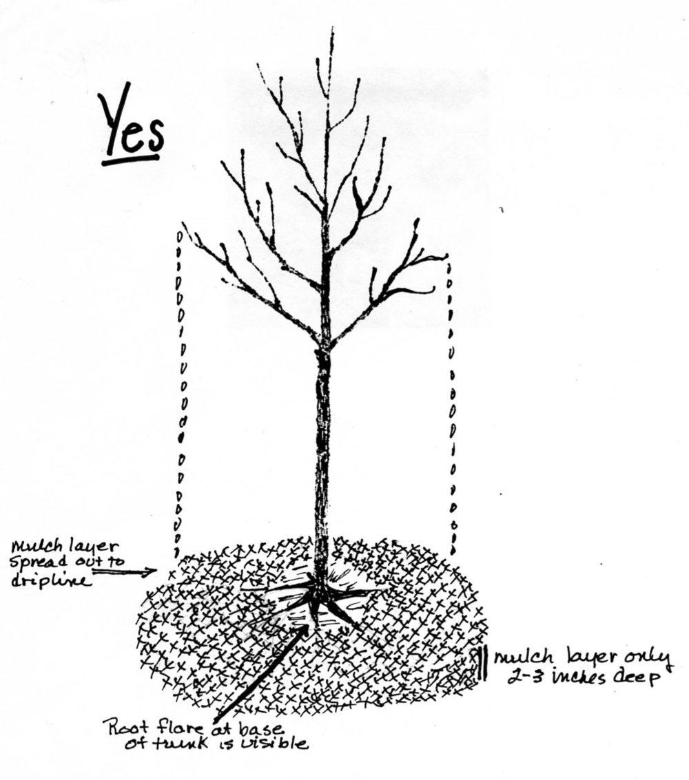 Mulching-Trees-YES.jpg