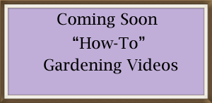 Coming Soon-Videos.png