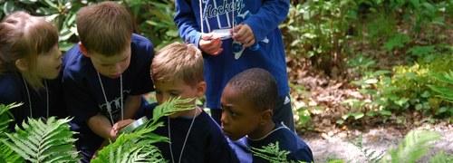 Go Botany - Plant ID Key