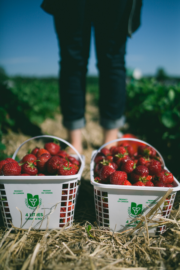 Berry Picking Ottawa Lifestyle Session