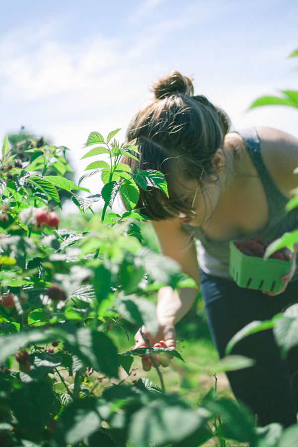Berry-Picking-Ottawa-Shouldice_5686.JPG