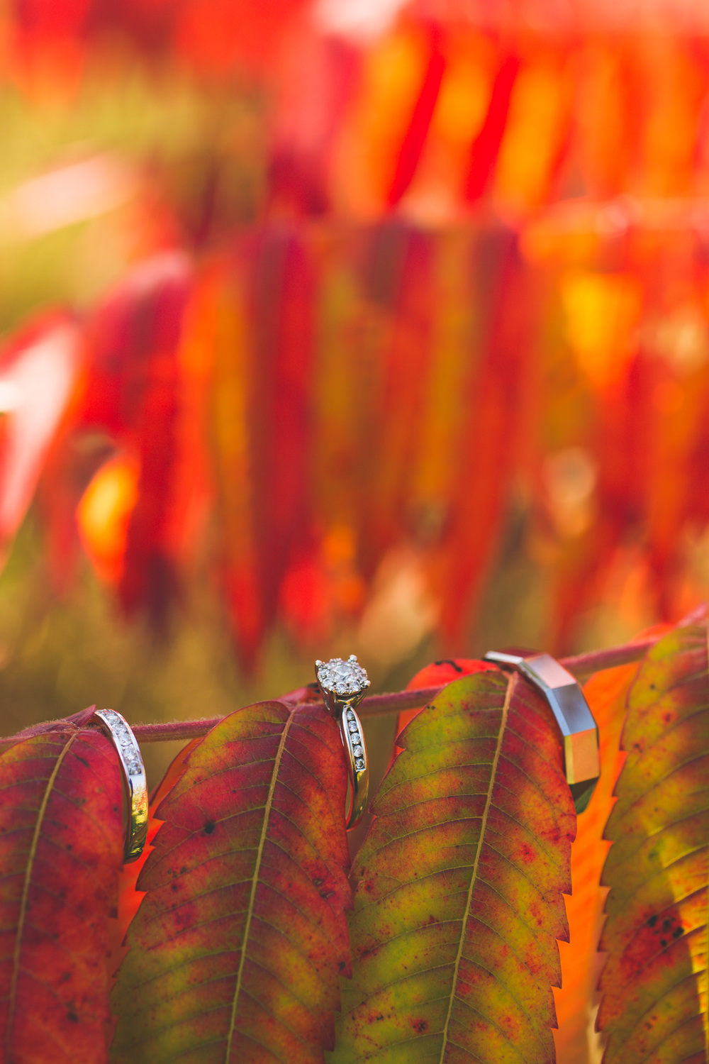 Wedding-rings-fall-colours