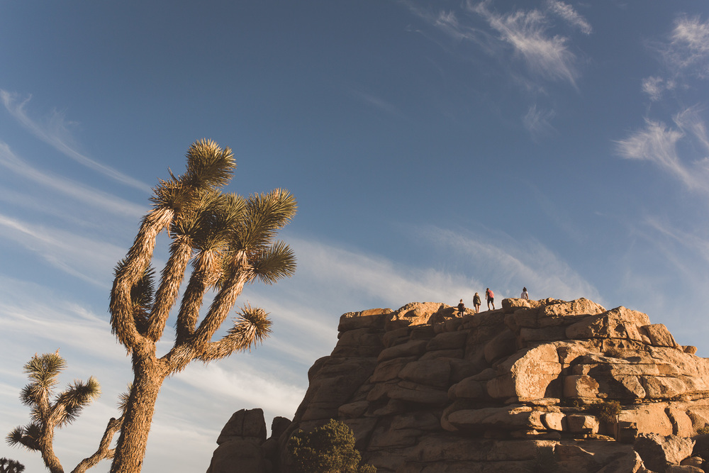 climbing-hill-in-joshua-tree