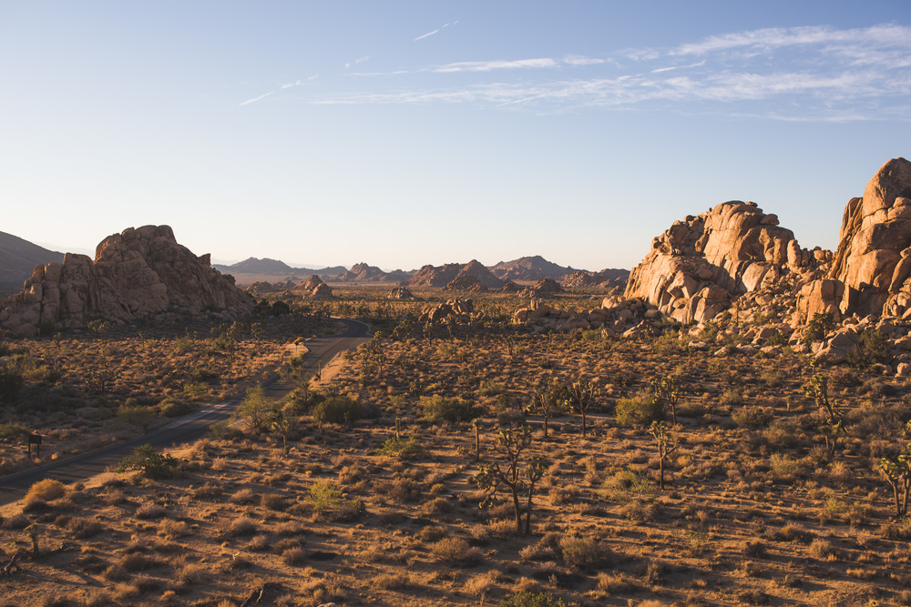 landscape-of-joshua-tree