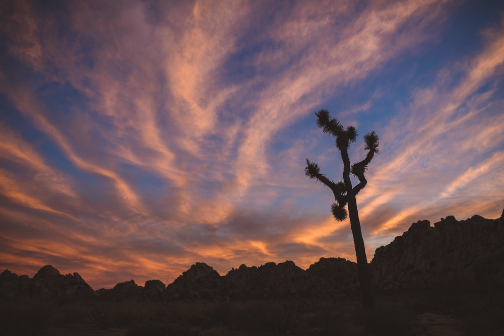 Amazing-sky-in-joshua-tree