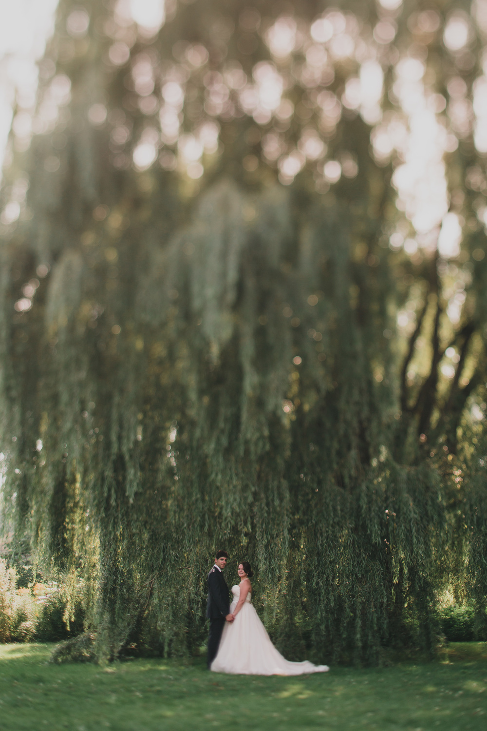 32-willow-tree-wedding-portrait.jpg