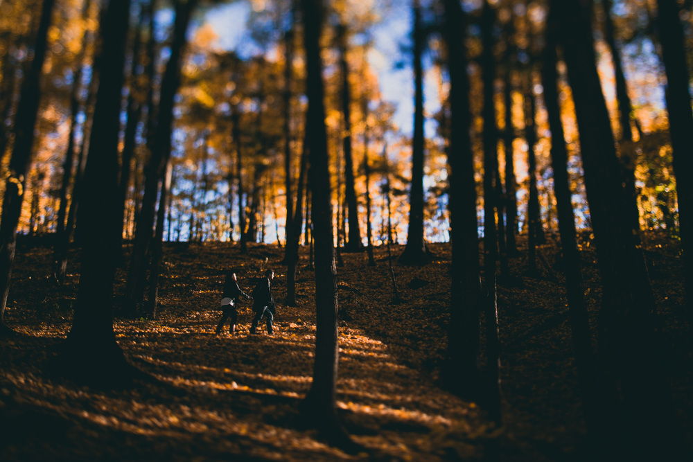 Jonathan Kuhn Photography engagement in a fall forest