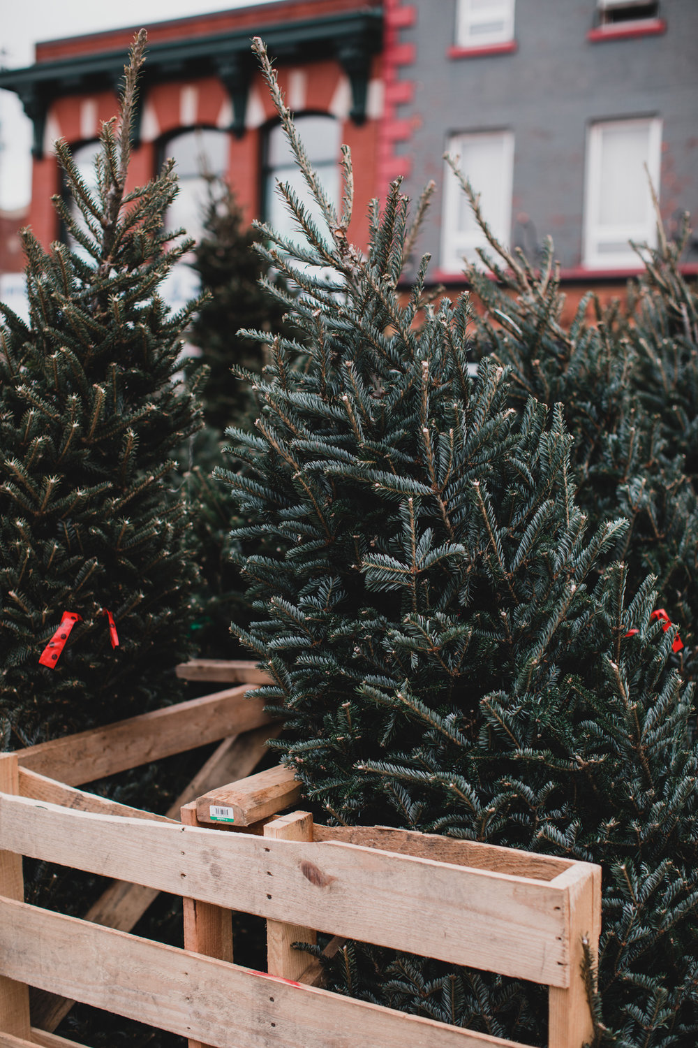 Byward Market Christmas tree