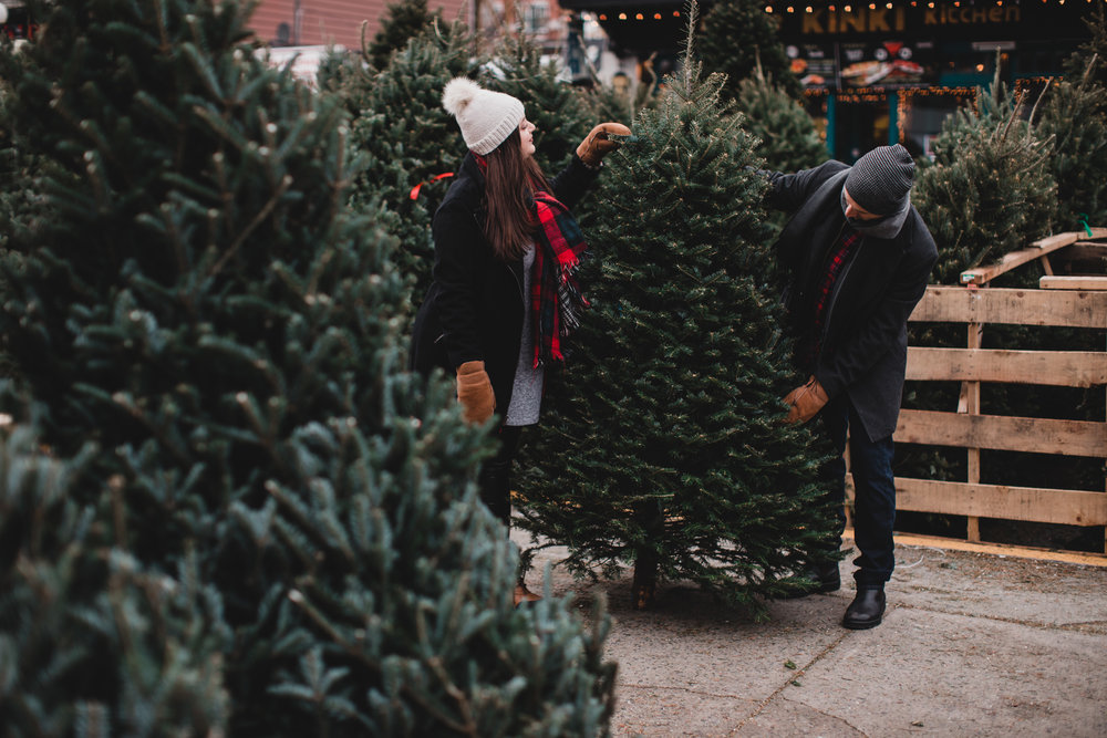 find the perfect chirstmas tree in ottawa