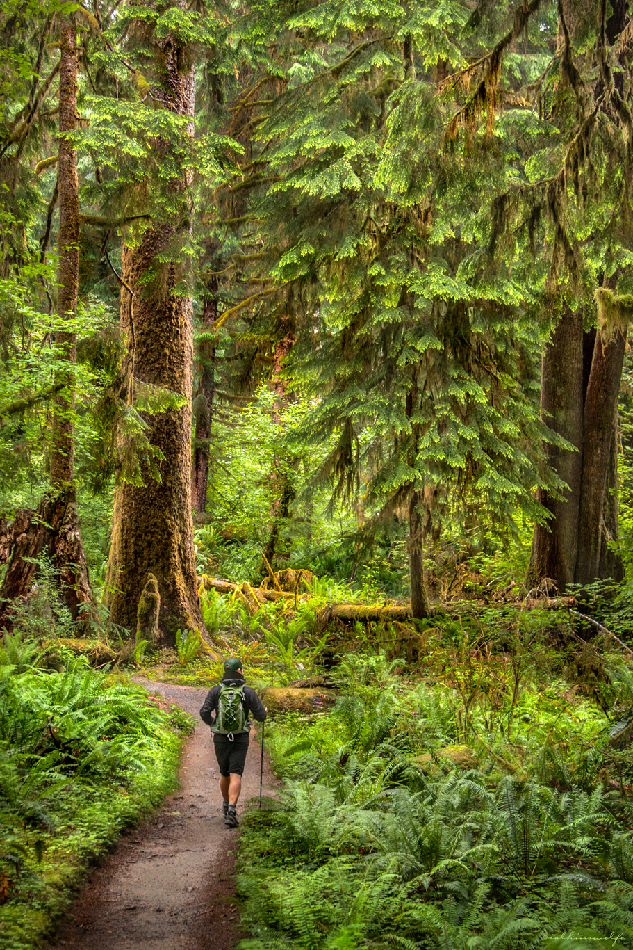 Hiking the Hoh Rainforest No. 2 - Washington state, 2012