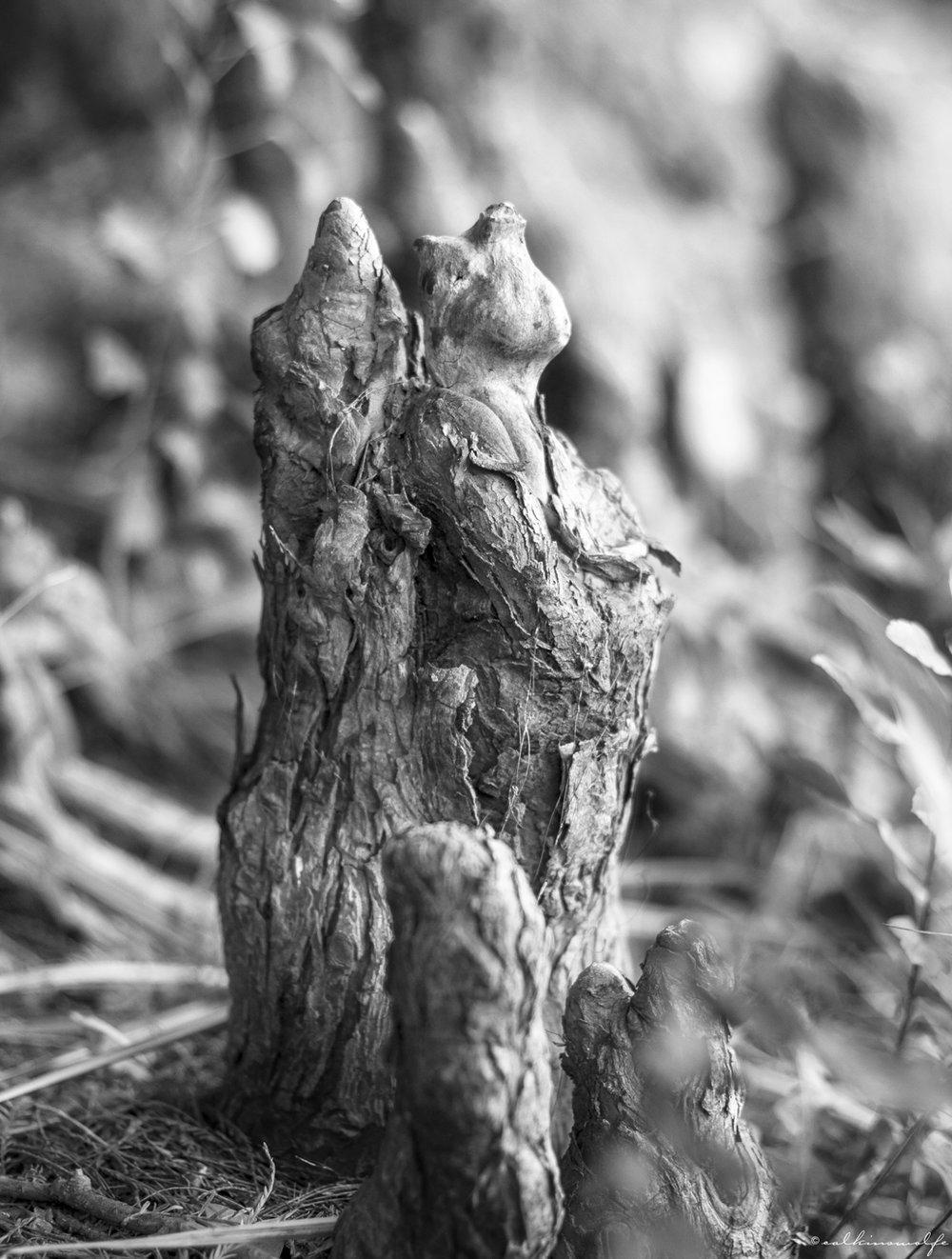 calkinswolfe_MG_9271_HighRes.jpg