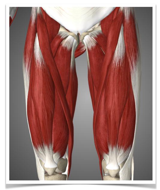 Quad muscles