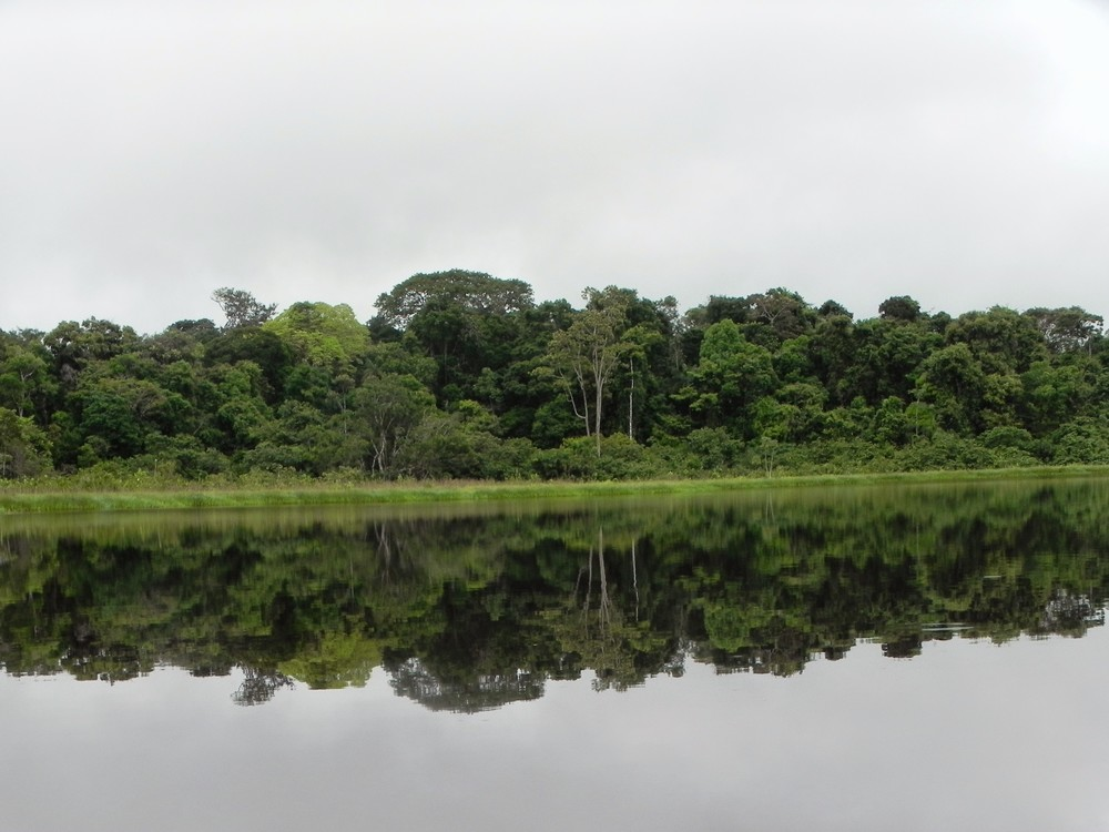 From my daughter's recent trip to the Amazon in Ecuador