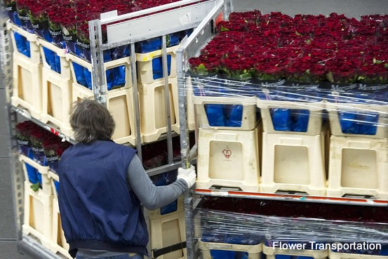 flower_transp2.jpg
