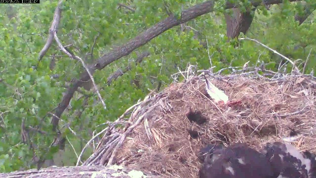 5-25-13 nest view.jpg
