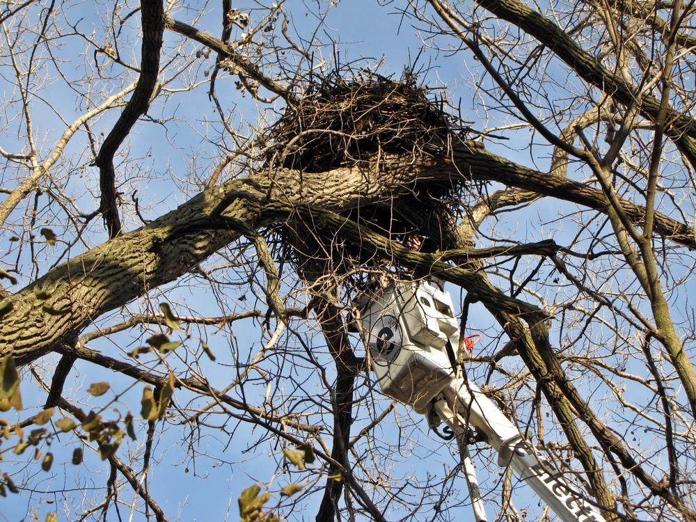 Nest (27).JPG