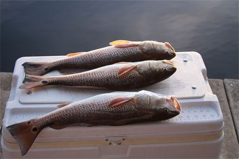 BWC-Panama-City-Beach-Backwater-Charter-Fishing-1.jpg
