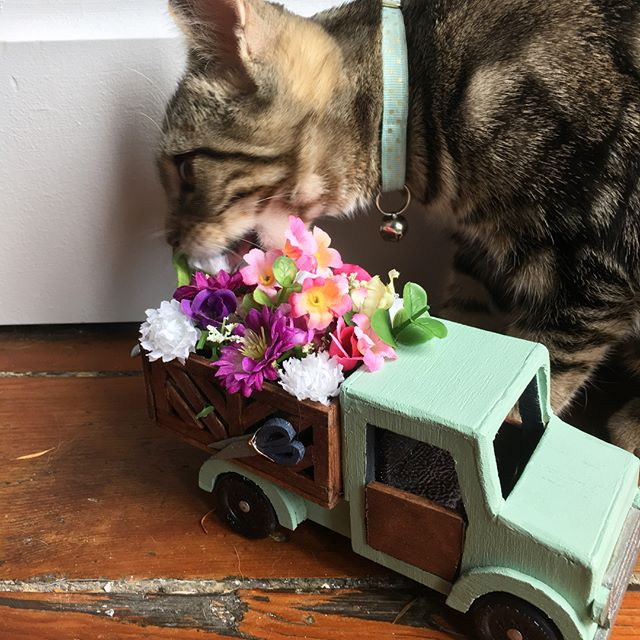 My little flower truck for  @thecsca pinewood derby! Jupiter is a little disappointed they're fake flowers. But I got a 2nd place trophy for best design and a little toolkit from @joinroot_ to help fix my truck when it fell off the track 😂🛠 Love this chance every year to get crafty! #cscapinewood18 #flowerdelivery #💐 #🏁