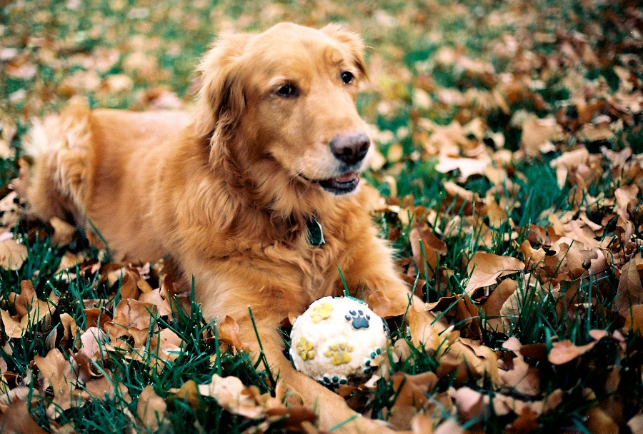My dog on Kodak Ektar 100