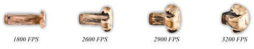 E-Tip-Mushrooms.jpg