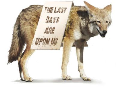 Darrick-coyote.jpg