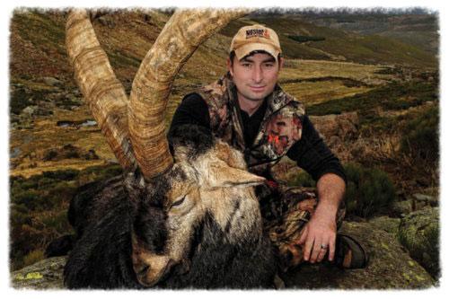 Awesome-sheep-pic.jpg