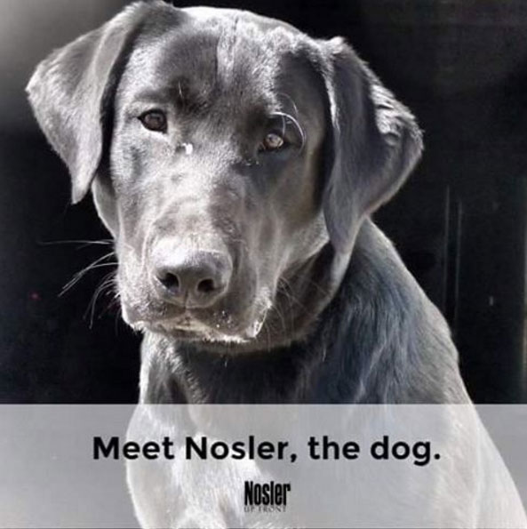 Nosler the dog photo