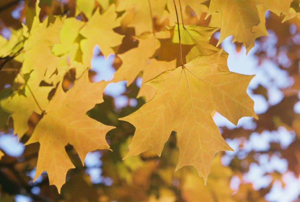 Fall Foliage - 2006