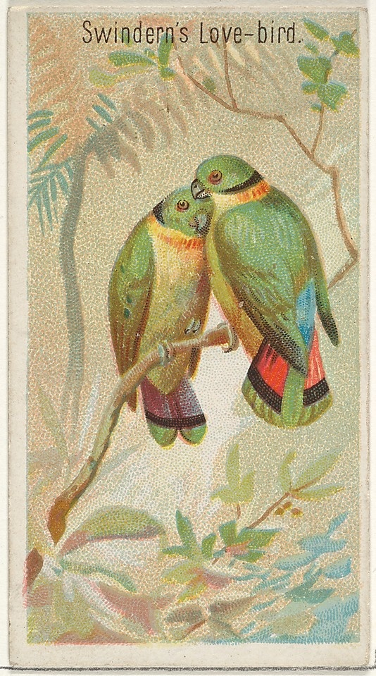 Swindern's Love-birds | Birds of the Tropics, Allen & Ginter cigarette cardca. 1890  via