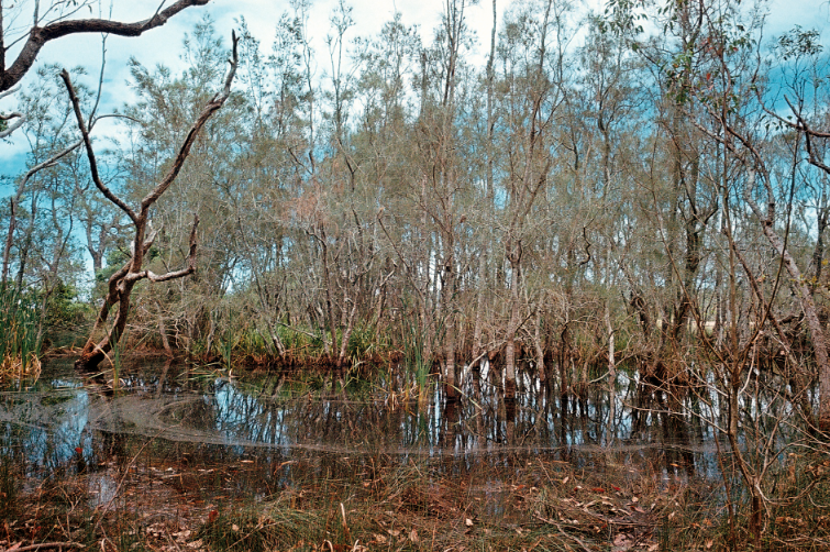 Swamp, 2012