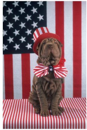 patriotic-dog.jpg