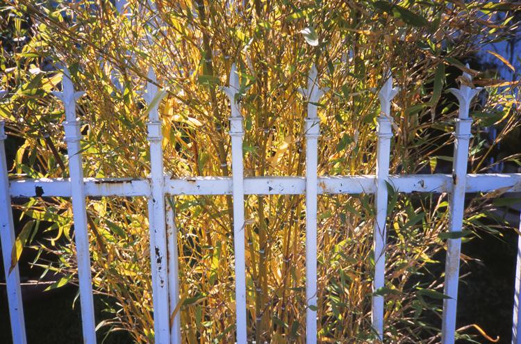 garden-grove_03.jpg