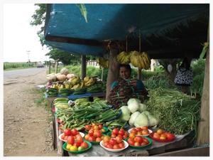 cucumber crop.jpg