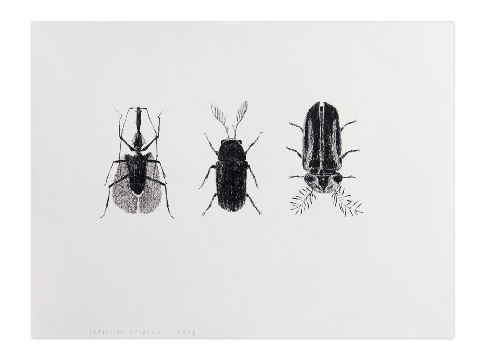 3 escarabajos , 2012, Charcoal on paper, 22,9 x 30,5 cm