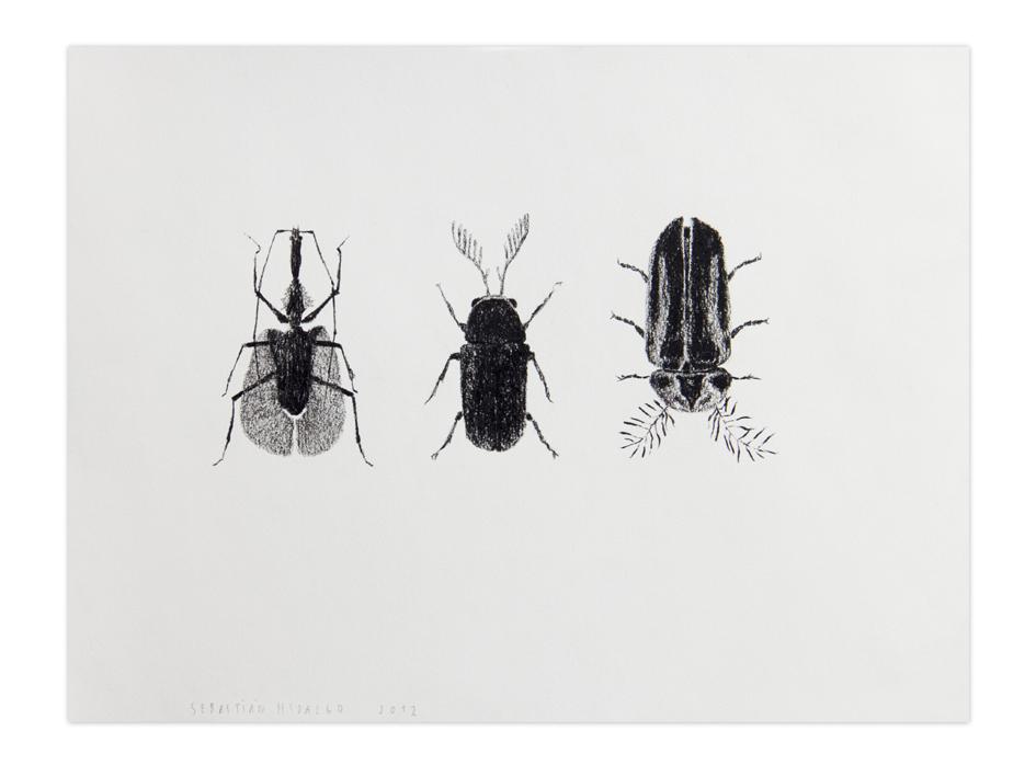 3 escarabajos , 2012, Charcoal on paper, 22,9 x 30,5 cm