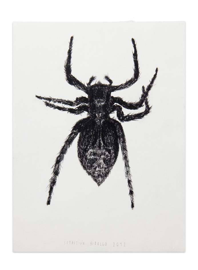Araña , 2012, Charcoal on paper, 30,5 x 22,9 cm