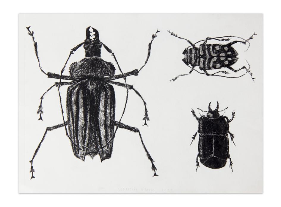 Escarabajos, 2012, Charcoal on paper, 23,5 x 30,5 cm