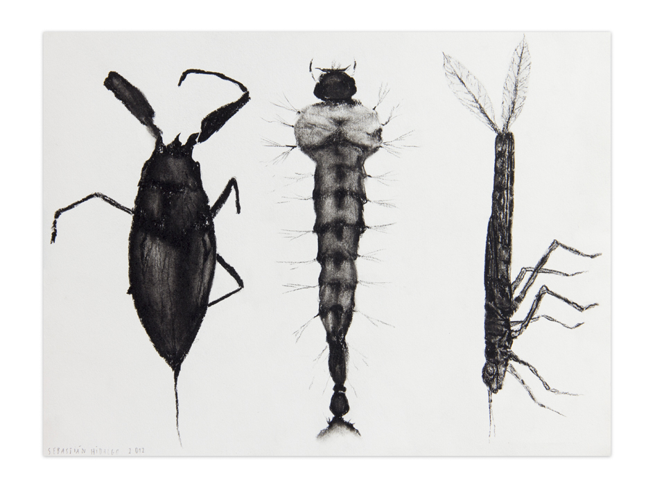Larvae , 2012, Charcoal on paper, 22,9 x 30,5 cm