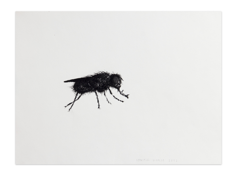 La mosca , 2012, Charcoal on paper, 30,5 x 22,9 cm